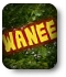 Wanee Music Festival graphic